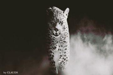 claudia strepp wildlife photography